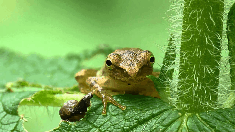 How to Get Rid of Slugs - Frogs Can Eat Slugs