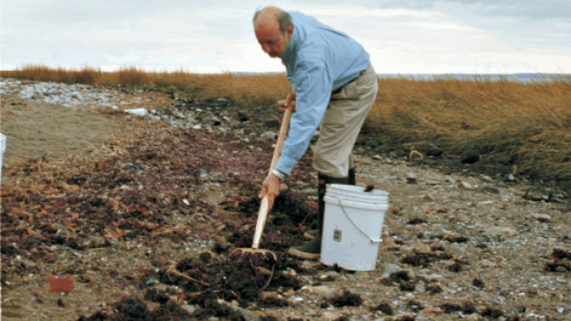 How to mix seaweed with soil