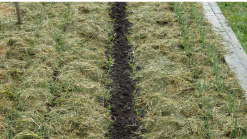 What Is The Best Thing To Do With Grass Clippings - Usage Of Grass Clippings As Mulch