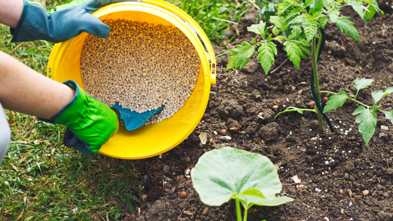 Best Fertilizer For Vegetable Seedlings