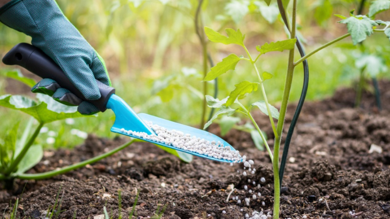 Choosing The Right Fertilizer To Green Up Leaves