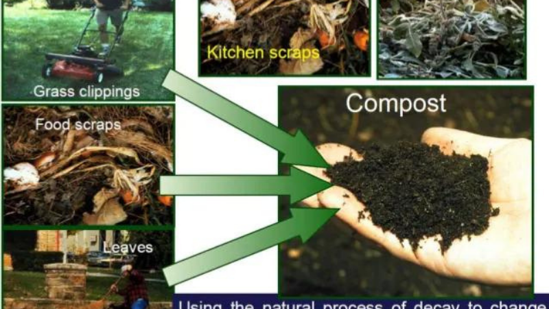 Collect Some Solid Wastes for compost