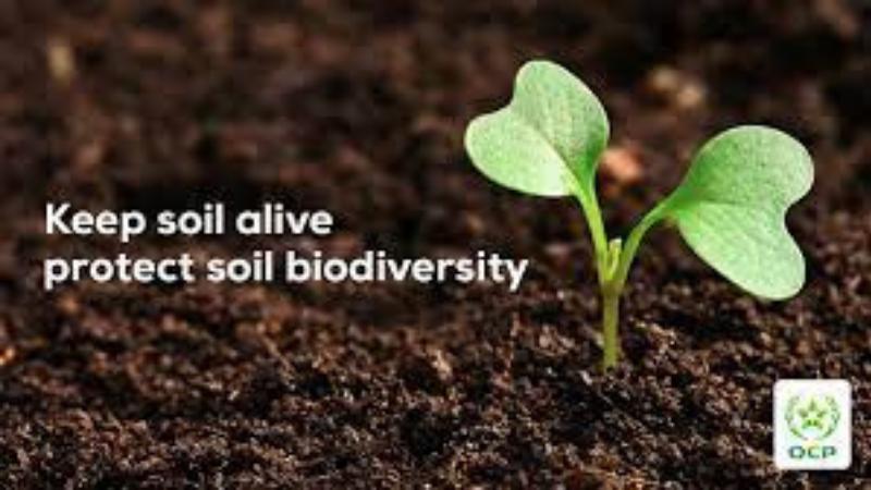 Feeding The Soil