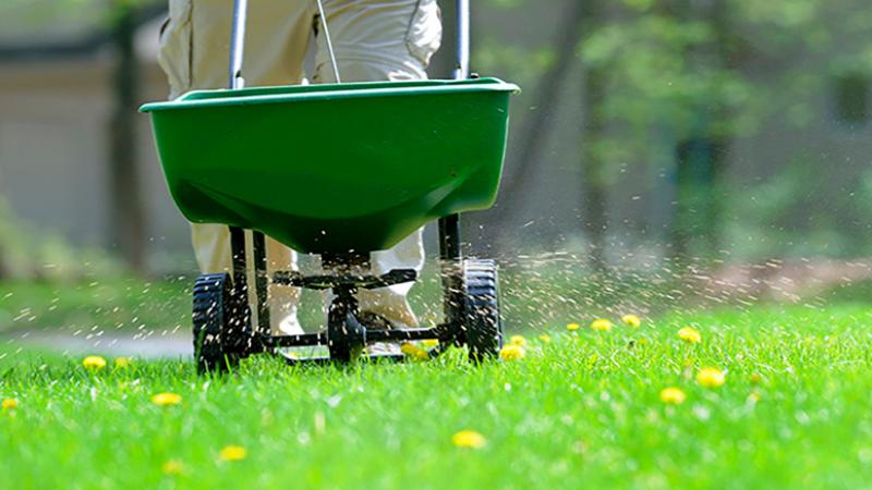 Fertilizing The Lawn