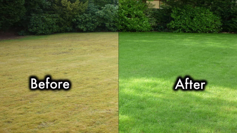 How Can I Make My Grass Green Fast?