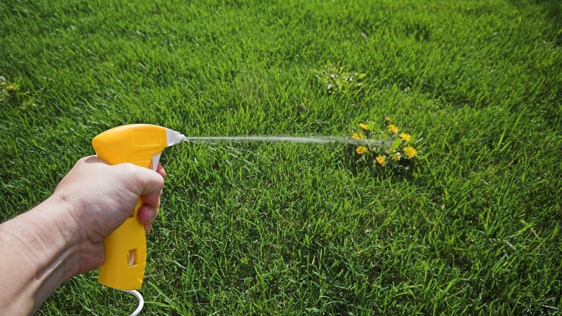 How Do Herbicides Kill Weeds But Not Grass?