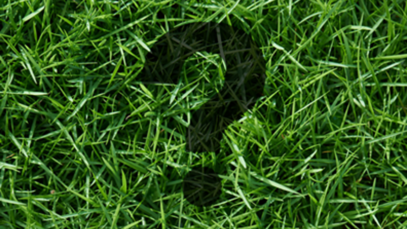 How Do You Get Rid Of Weeds So They Never Come Back - Step 1 Identifying Grass Type