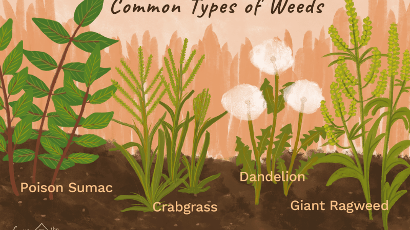 How Do You Get Rid Of Weeds So They Never Come Back - Step 2 Identifying Weed Type