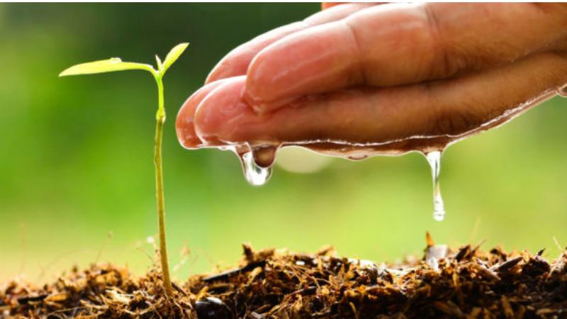 How Do You Promote Leaf Growth - Which Fertilizer Promotes Leaf Growth?