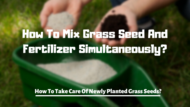 How To Mix Grass Seed And Fertilizer Simultaneously?