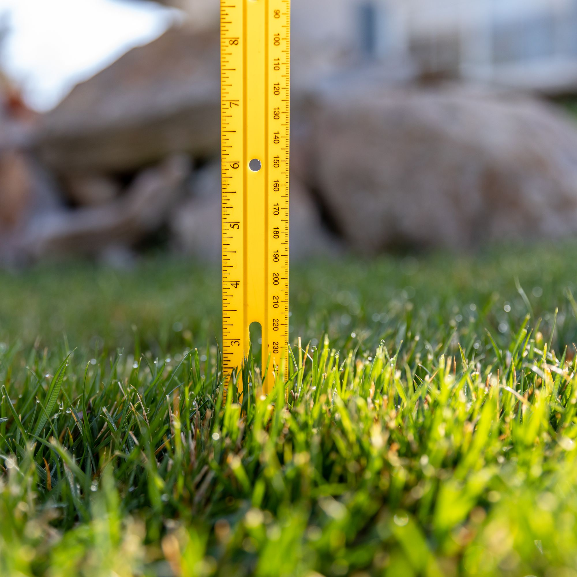 Maintaining A Perfect Height For Turf Grass