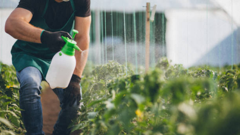 Spray The weed killer on the plant