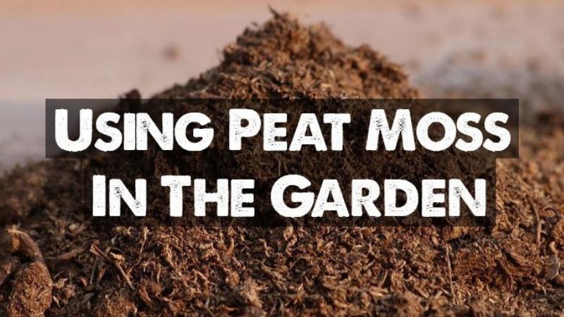Using A Peat Moss