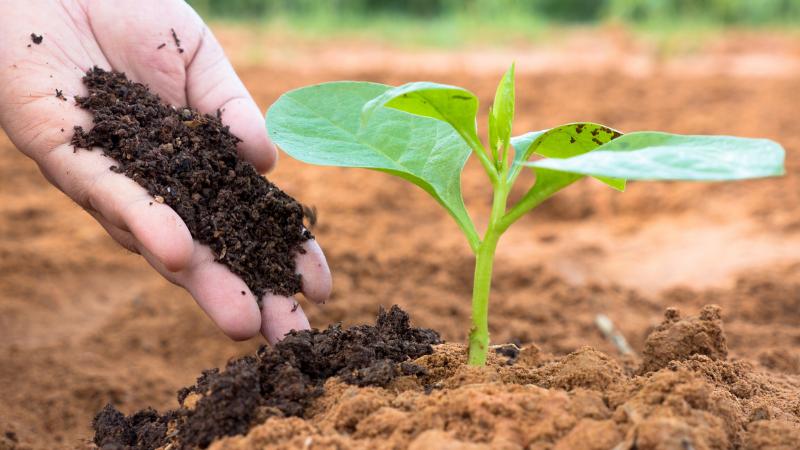 Using The compost Fertilizer