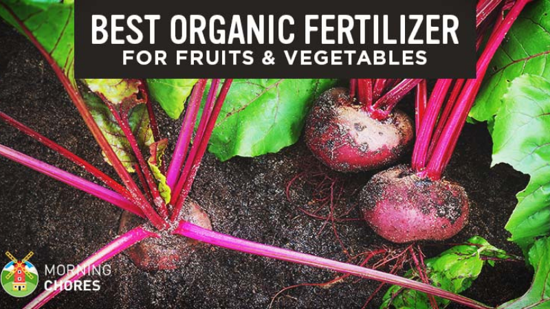 What Is The Best Fertilizer For Fruits And Vegetables?