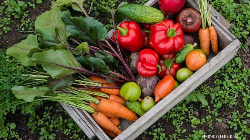 What Vegetables Should I Fertilize?