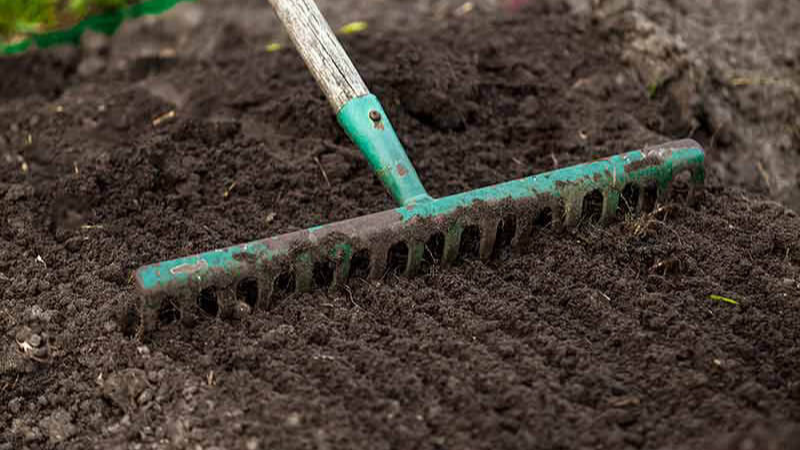 When Is The Best Time To Sow Grass Seeds?