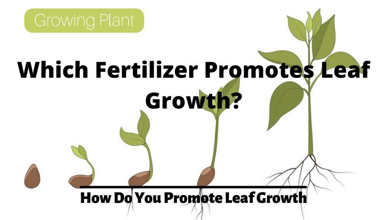 Which Fertilizer Promotes Leaf Growth - How Do You Promote Leaf Growth