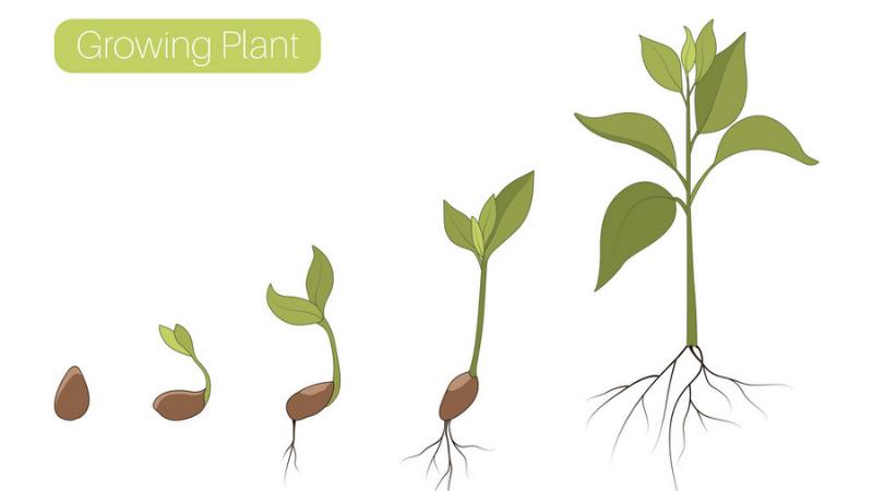 Which Fertilizer Promotes Leaf Growth?Which Fertilizer Promotes Leaf Growth?