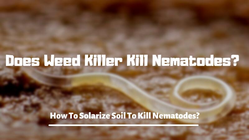 Does Weed Killer Kill Nematodes? How To Solarize Soil To Kill Nematodes?