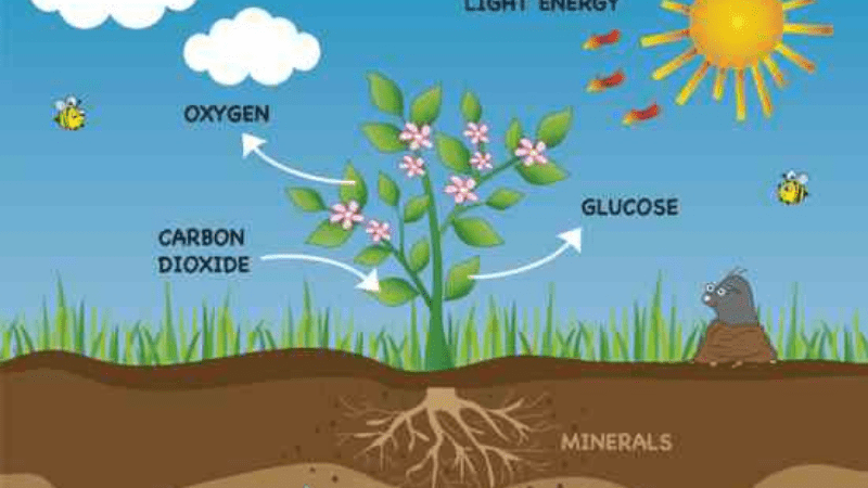 How Photosynthesis Process Works?
