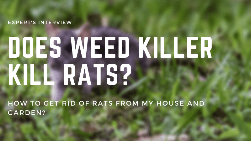 Does Weed Killer Kill Rats? How To Get Rid of Rats From My House And Garden?